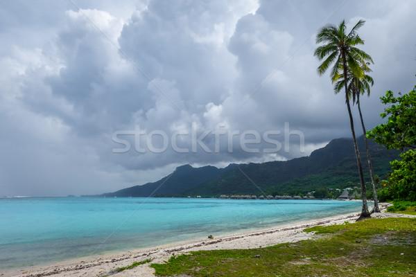 Palmbomen strand eiland frans polynesië zee Stockfoto © daboost