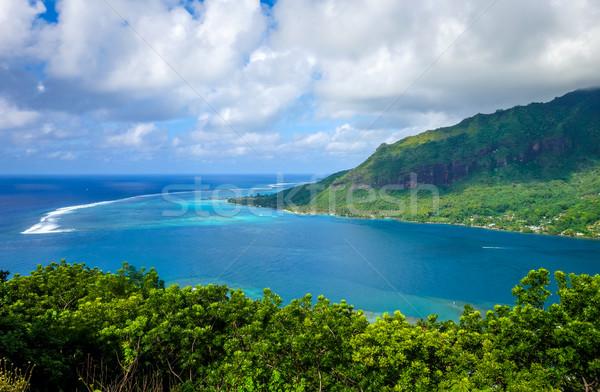 Ilha francês polinésia árvore floresta Foto stock © daboost