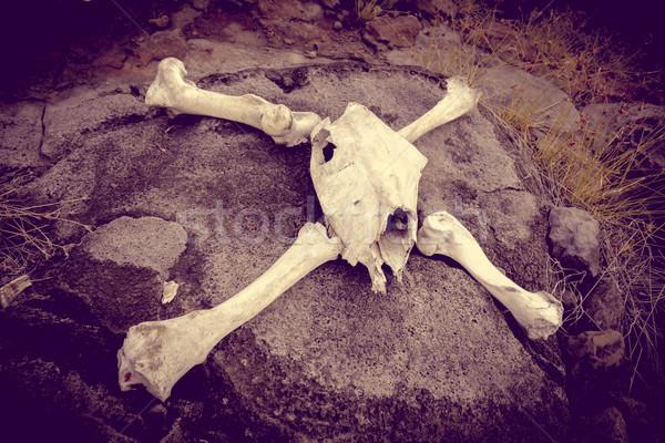Cavalo crânio ossos Ilha de Páscoa natureza paisagem Foto stock © daboost