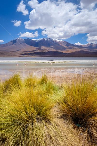 Laguna Honda in sud Lipez Altiplano reserva, Bolivia Stock photo © daboost