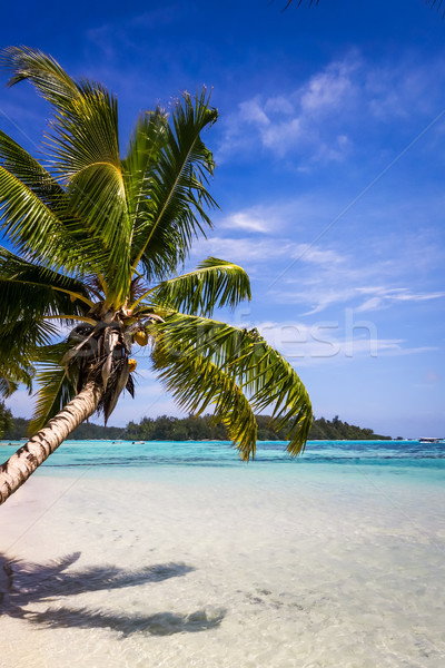 Paradise tropical beach and lagoon in Moorea Island Stock photo © daboost