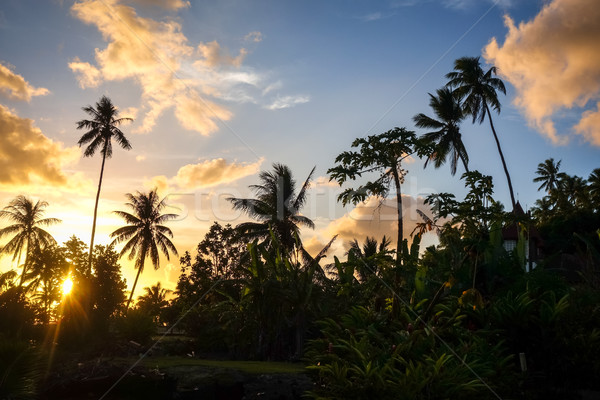 Palmboom zonsondergang eiland frans polynesië zon Stockfoto © daboost