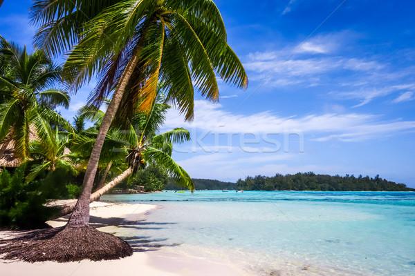 рай тропический пляж острове французский Полинезия пляж Сток-фото © daboost