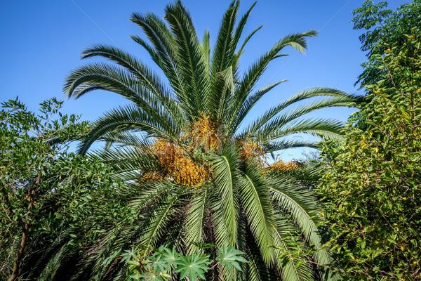 Palmboom tropische bos exotisch landschap hemel Stockfoto © daboost