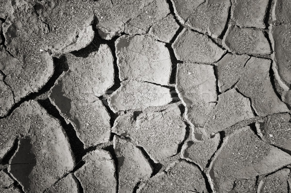 dry mud land background texture Stock photo © daboost