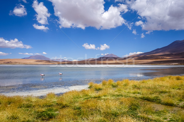 Pink flamingos in altiplano laguna, sud Lipez reserva, Bolivia Stock photo © daboost