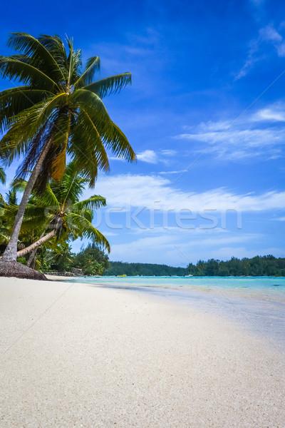 Paradies tropischen Strand Insel Französisch Strand Stock foto © daboost