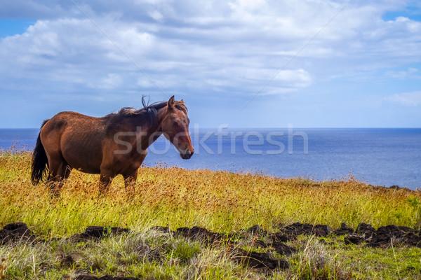Cavalo páscoa ilha oceano grama Foto stock © daboost
