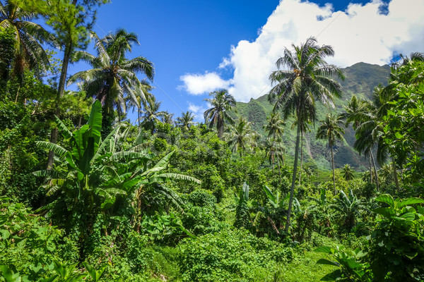 Moorea island jungle and mountains landscape view Stock photo © daboost