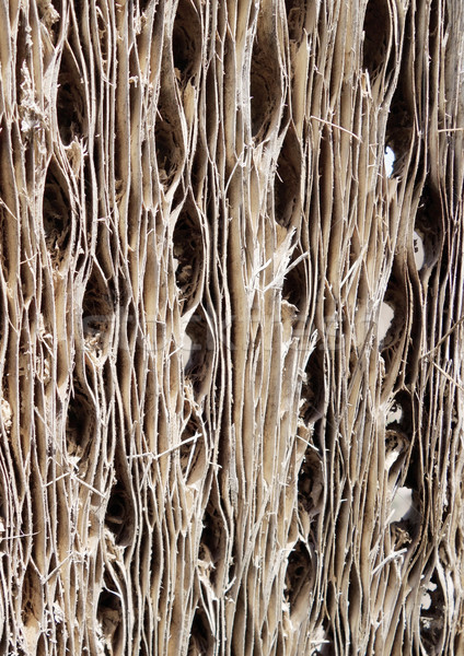 Cacto madeira casca textura abstrato papel de parede Foto stock © daboost