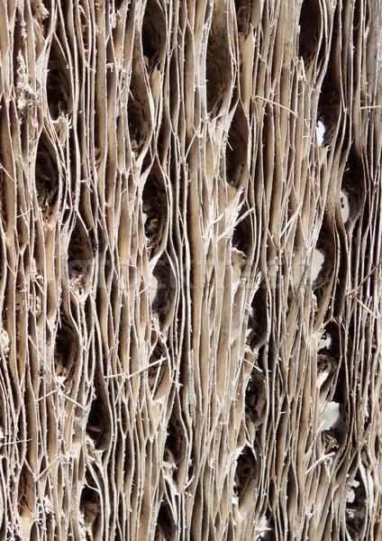 Cactus madera corteza textura resumen wallpaper Foto stock © daboost