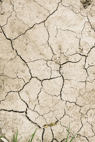dry mud desert background texture Stock photo © daboost