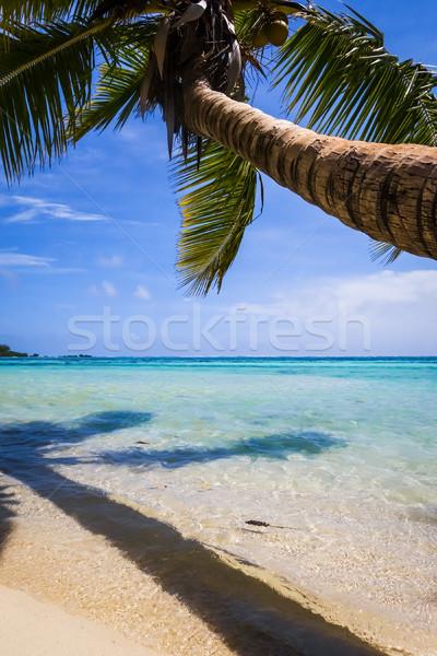 Paradise tropical beach and lagoon in Moorea Island Stock photo © daboost