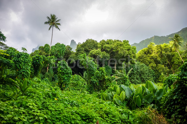 Ada orman dağlar manzara fransız polinezya Stok fotoğraf © daboost