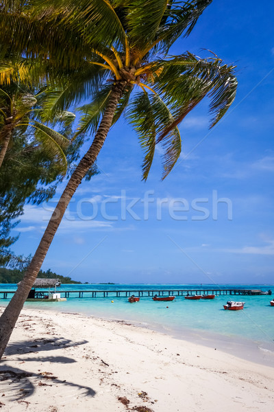 white sand beach and pier on the lagoon in Moorea Island Stock photo © daboost