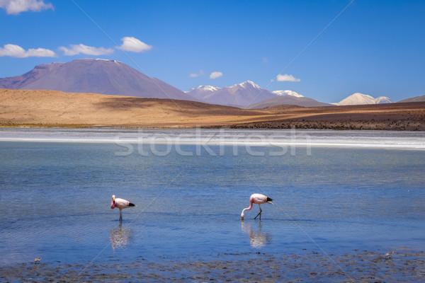 Rosa céu sol natureza paisagem deserto Foto stock © daboost