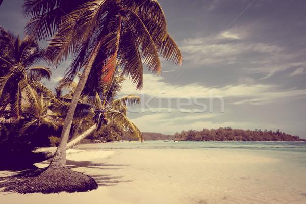 Cennet tropikal plaj ada fransız polinezya plaj Stok fotoğraf © daboost