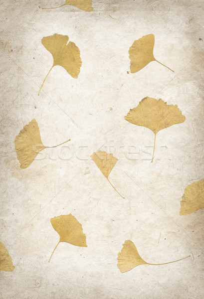Kézzel készített virág szirom papír textúra papír természet Stock fotó © daboost