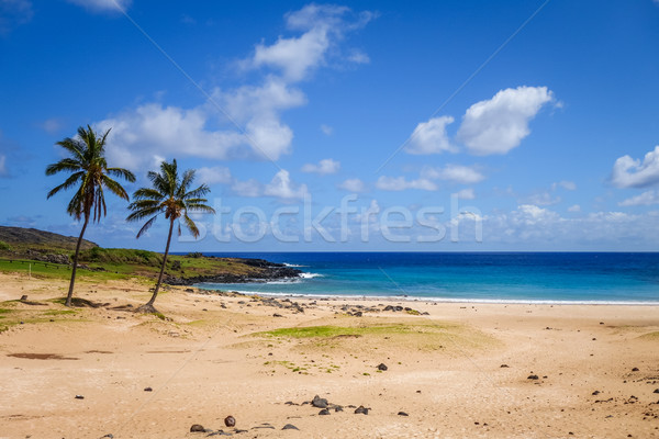 Palmeiras praia Ilha de Páscoa Chile céu floresta Foto stock © daboost