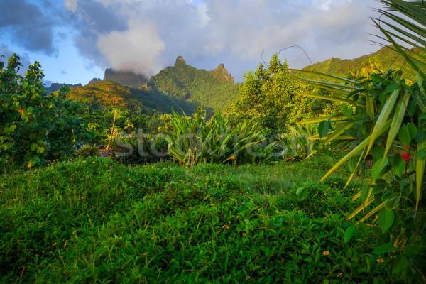 Moorea island jungle and mountains landscape Stock photo © daboost