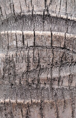 Kókusz fa fa ugatás textúra absztrakt Stock fotó © daboost