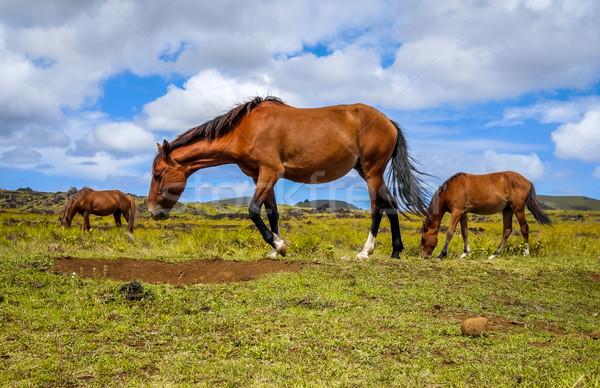 Cavalos Ilha de Páscoa campo oceano Chile céu Foto stock © daboost