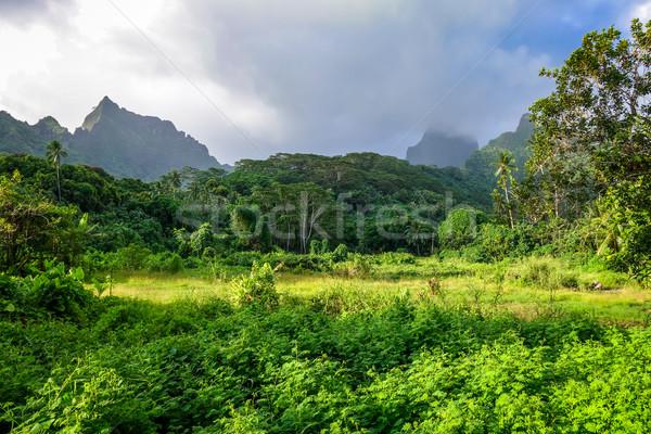 Sziget dzsungel hegyek tájkép francia Polinézia Stock fotó © daboost