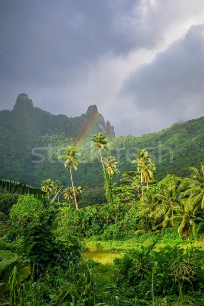 Rainbow île jungle montagnes paysage français Photo stock © daboost