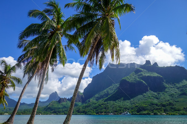 Cook's Bay and lagoon in Moorea Island Stock photo © daboost