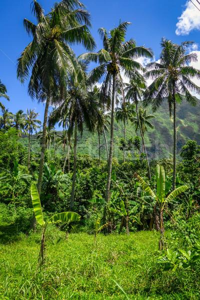 Sziget dzsungel hegyek tájkép kilátás francia Stock fotó © daboost
