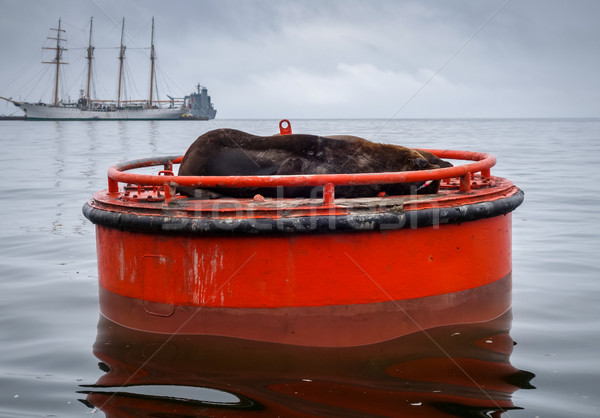 Oroszlánfóka kikötő Chile dél-amerika égbolt természet Stock fotó © daboost