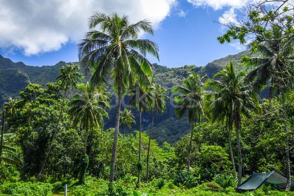 Ada orman dağlar manzara görmek fransız Stok fotoğraf © daboost