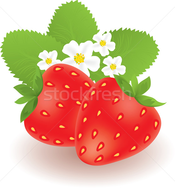 strawberries with leaves and flowers Stock photo © Dahlia