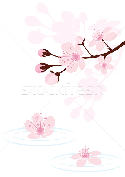 Vetor cereja ramo água árvore abstrato Foto stock © Dahlia