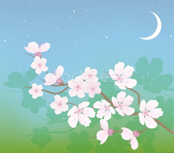Vektor cseresznye ág égbolt tavasz absztrakt Stock fotó © Dahlia