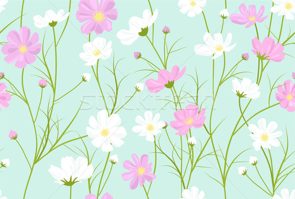 vector seamless floral pattern with cosmos flowers  Stock photo © Dahlia