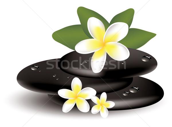 vector frangipani flowers and wet stones Stock photo © Dahlia