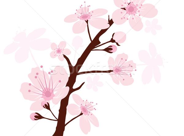 Сток-фото: вектора · Вишневое · филиала · весны · аннотация · белый