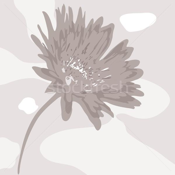 Vektor absztrakt kifakult virág vektor virág természet Stock fotó © Dahlia