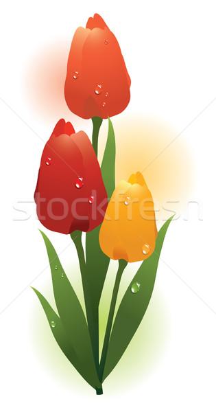 Vetor monte colorido tulipas fresco gotas de água Foto stock © Dahlia