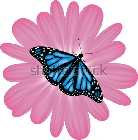 butterflies on a flower Stock photo © Dahlia