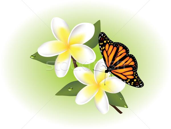 Vektör kelebek çiçek soyut dizayn yaprak Stok fotoğraf © Dahlia