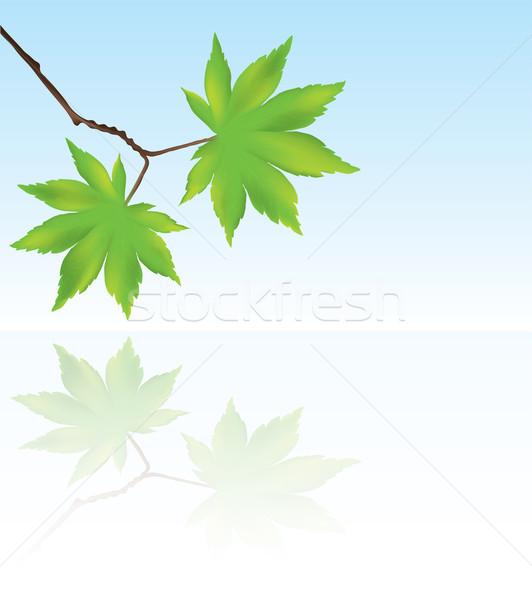 ベクトル メイプル 葉 反射 水 eps10 ストックフォト © Dahlia