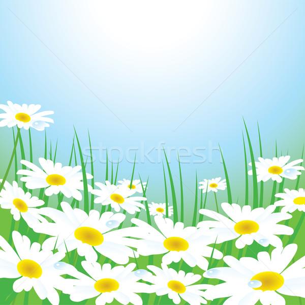 Foto stock: Vetor · prado · água · primavera · verde · cor