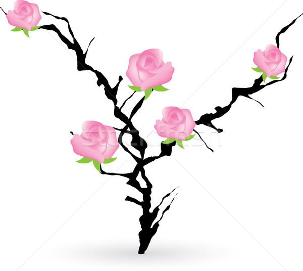 Arbusto rosas vetor flor rosa preto Foto stock © Dahlia