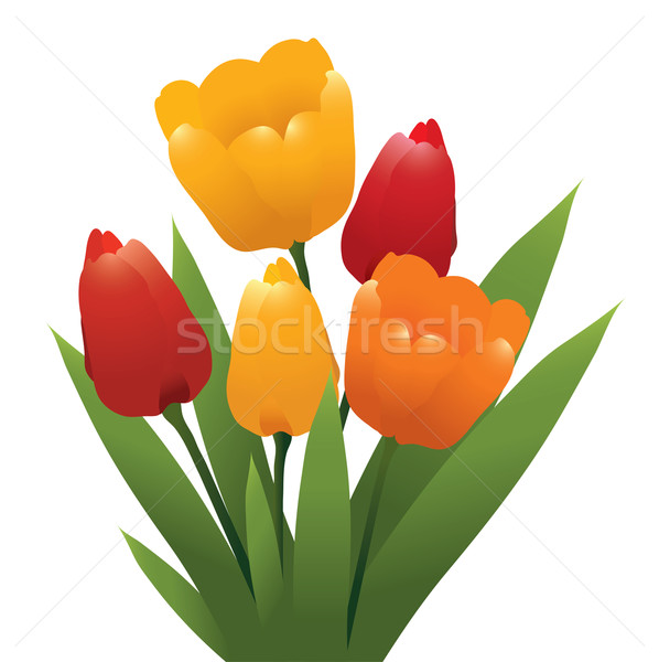 vector bunch of red, orange and yellow tulips Stock photo © Dahlia