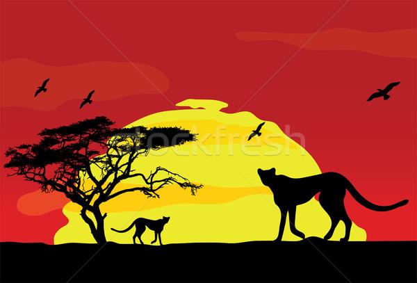 Photo stock: Vecteur · sauvage · africaine · animaux · coucher · du · soleil · paysage