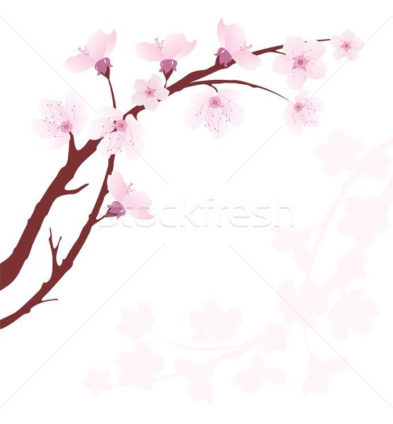 ベクトル 桜 支店 春 抽象的な 白 ストックフォト © Dahlia