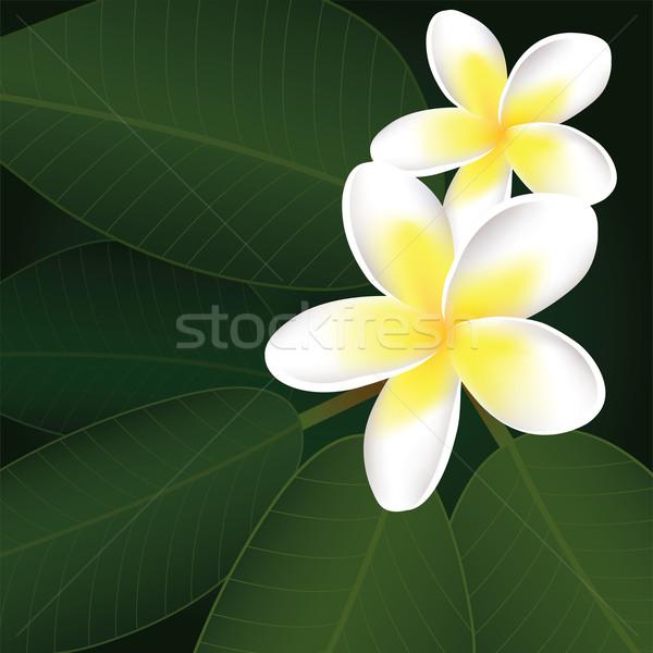 Сток-фото: вектора · цветы · цветок · аннотация · природы · дизайна