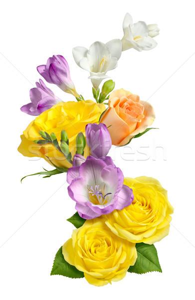 роз изолированный белый весны закрывается завода Сток-фото © danny_smythe